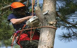 Tree Removal & Trimming Services Business