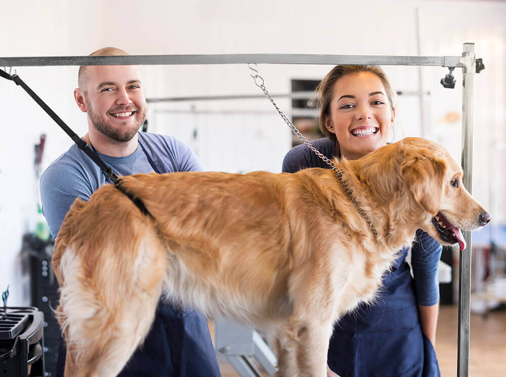 Pet Care Businesses