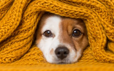 Pet Care Services: A Burgeoning Industry
