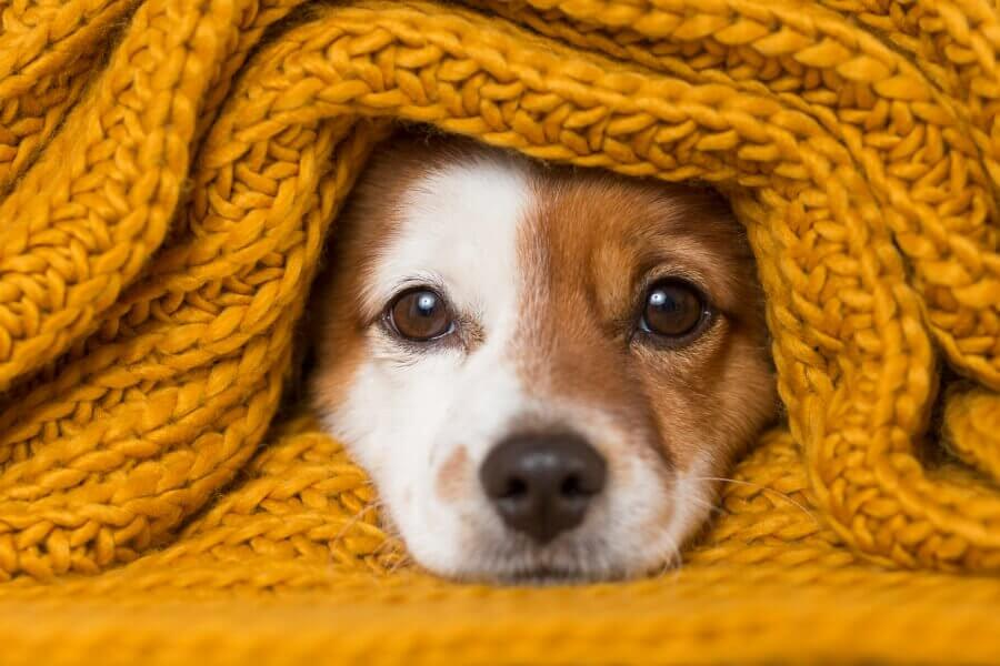 Pet Care Industry is Burgeoning