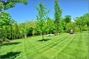 Enviable Middlesex County Landscaping Business